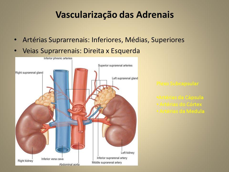 Vascularização das Adrenais