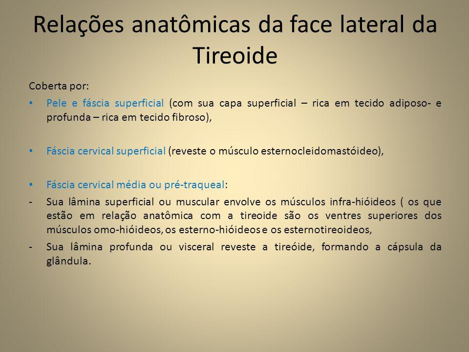 Relações anatômicas da face lateral da Tireoide