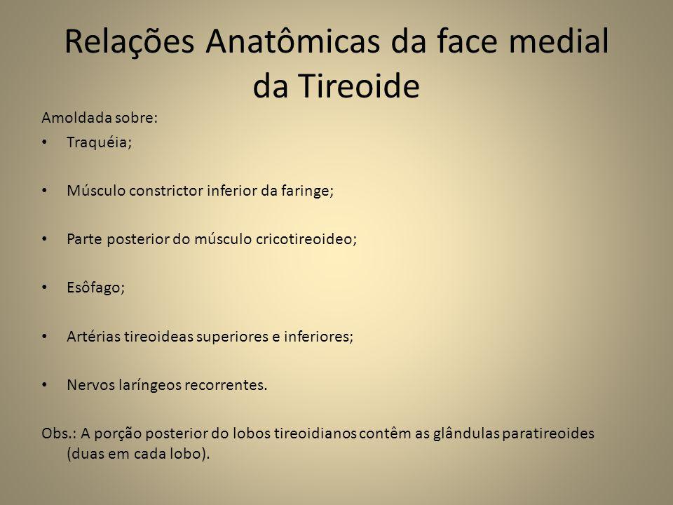 Relações Anatômicas da face medial da Tireoide