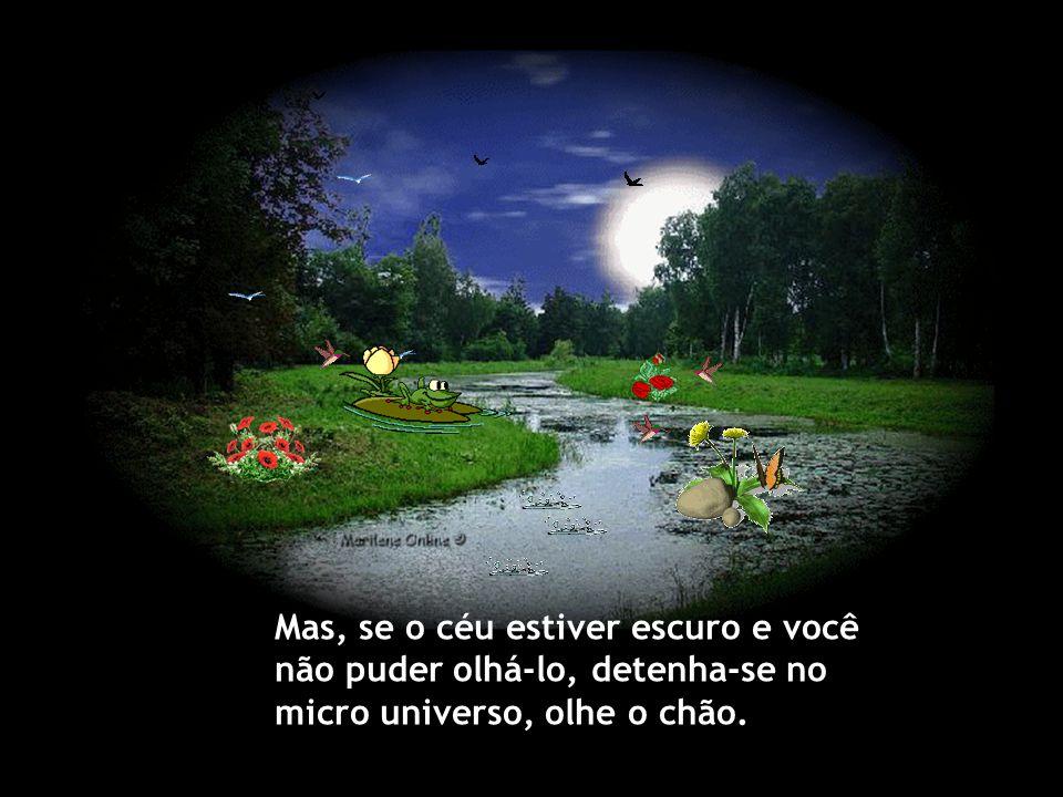 Mas, se o céu estiver escuro e você não puder olhá-lo, detenha-se no micro universo, olhe o chão.