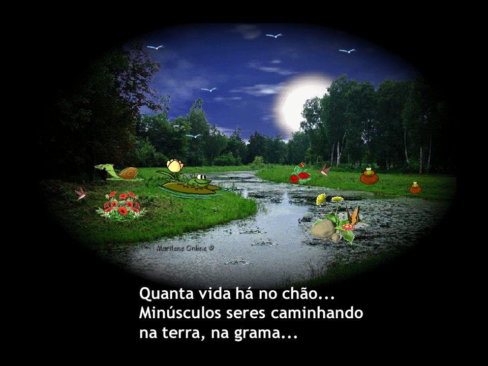 Quanta vida há no chão... Minúsculos seres caminhando na terra, na grama...