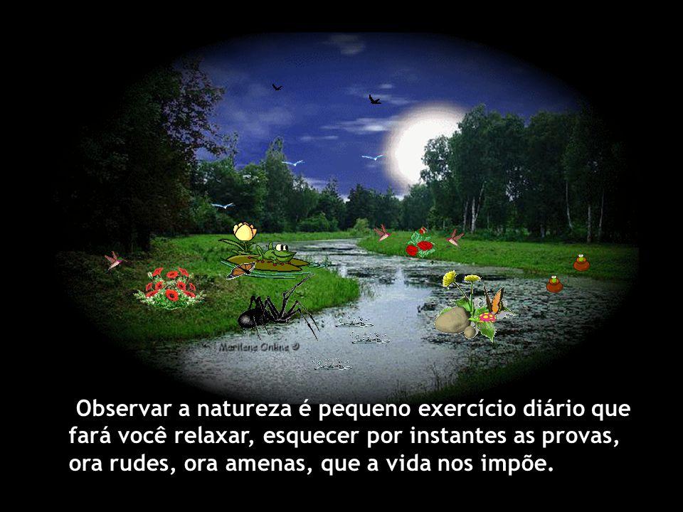 Observar a natureza é pequeno exercício diário que fará você relaxar, esquecer por instantes as provas, ora rudes, ora amenas, que a vida nos impõe.