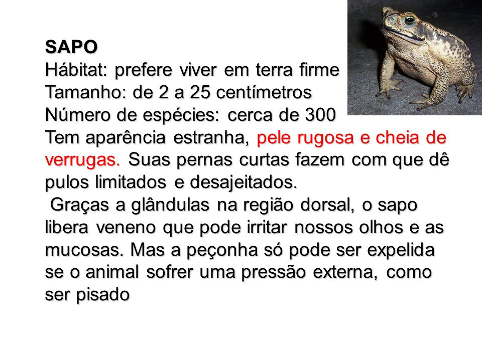 SAPO Hábitat: prefere viver em terra firme. Tamanho: de 2 a 25 centímetros. Número de espécies: cerca de 300.