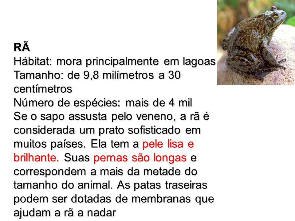 RÃ Hábitat: mora principalmente em lagoas. Tamanho: de 9,8 milímetros a 30 centímetros. Número de espécies: mais de 4 mil.