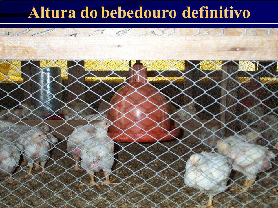 Altura do bebedouro definitivo