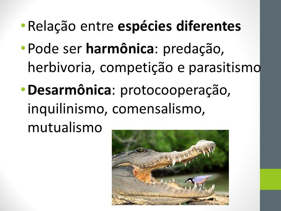 Relação entre espécies diferentes