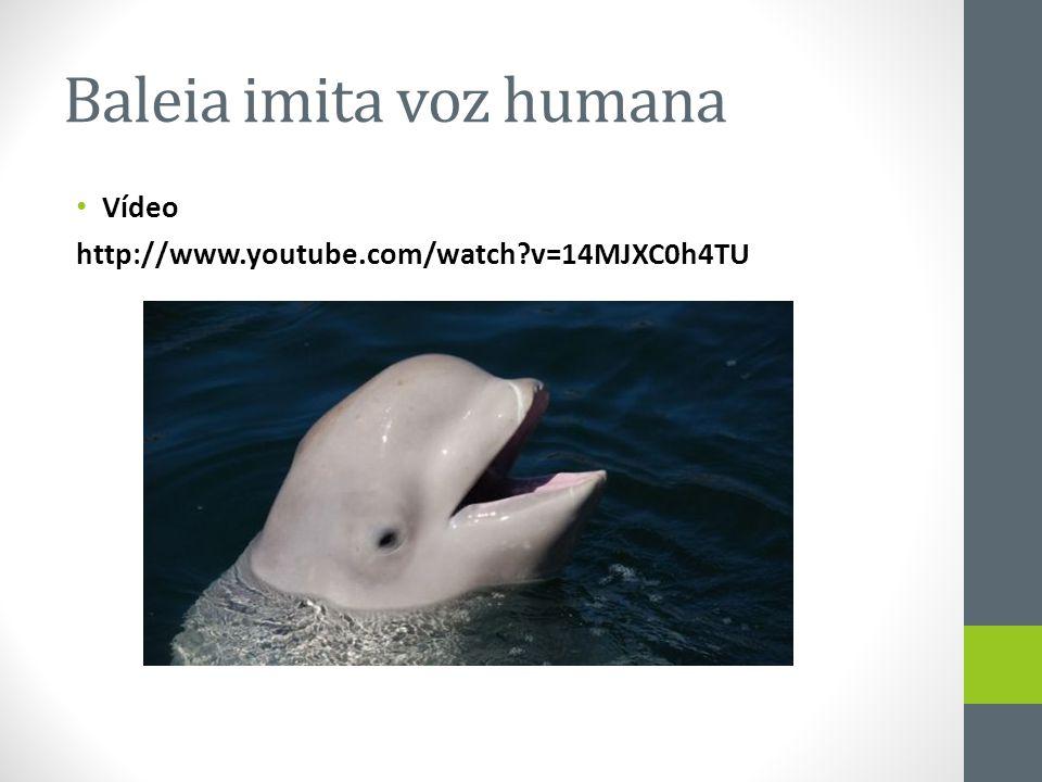 Baleia imita voz humana
