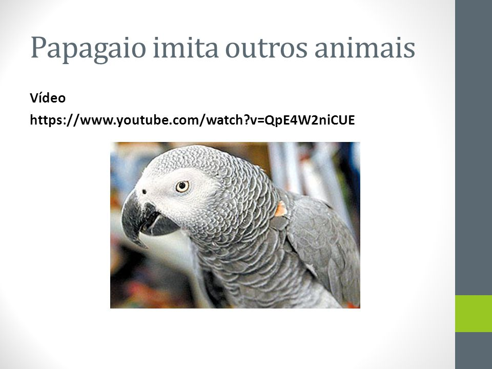 Papagaio imita outros animais