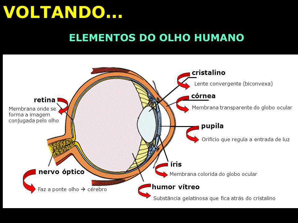 ELEMENTOS DO OLHO HUMANO