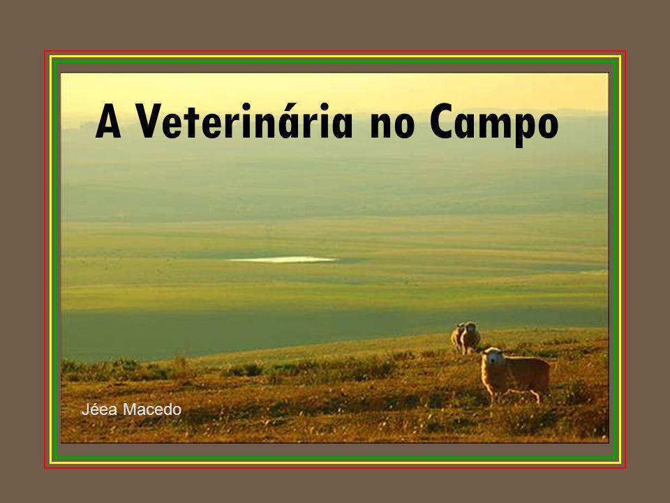 A Veterinária no Campo Jéea Macedo