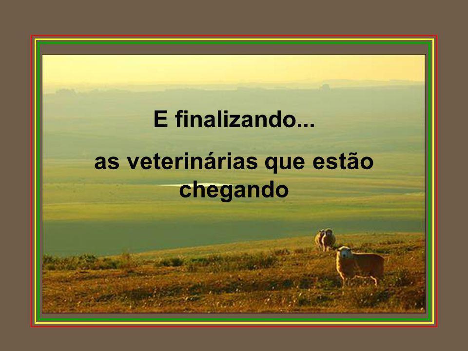 as veterinárias que estão chegando