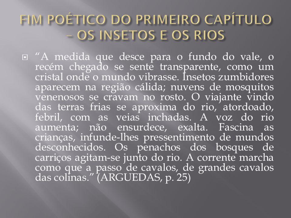 FIM POÉTICO DO PRIMEIRO CAPÍTULO – OS INSETOS E OS RIOS