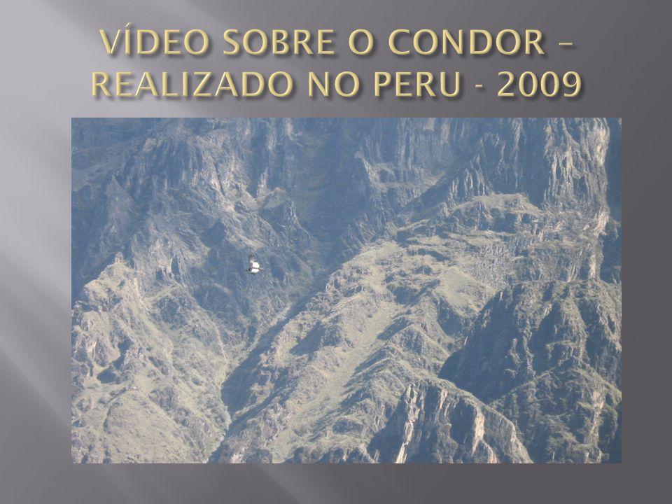 VÍDEO SOBRE O CONDOR – REALIZADO NO PERU - 2009