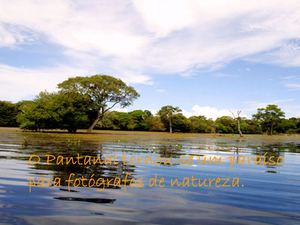 O Pantanal tornou-se um paraíso para fotógrafos de natureza.