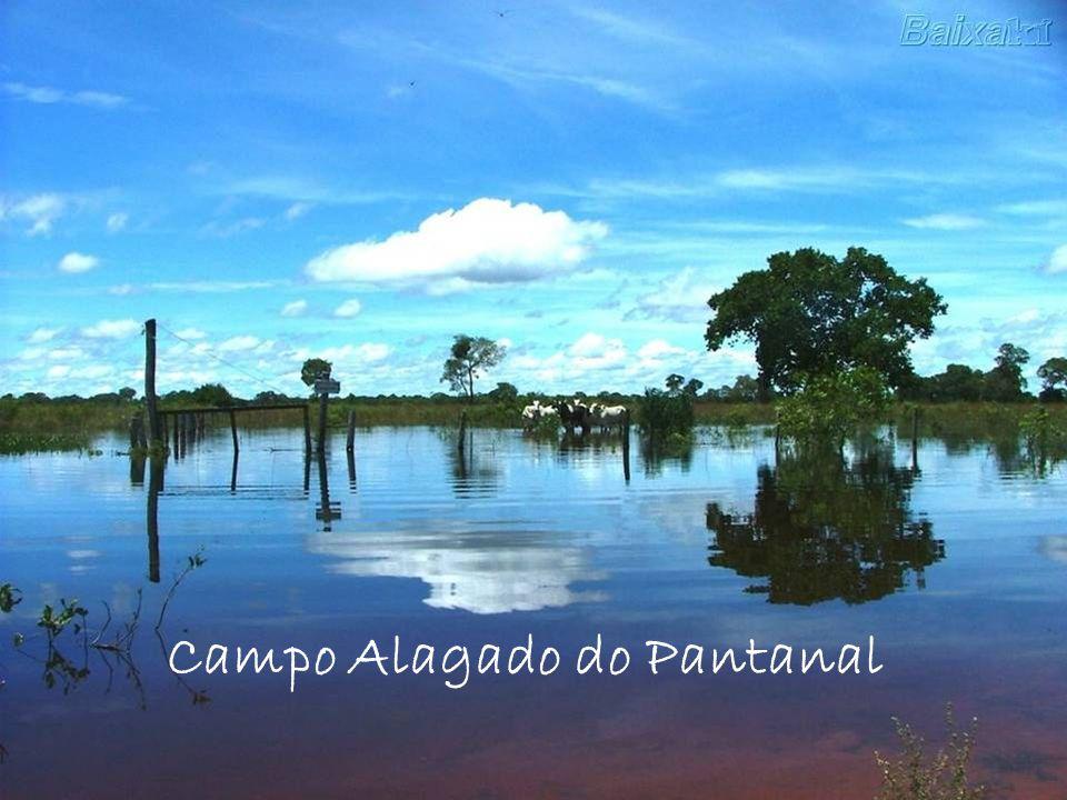 Campo Alagado do Pantanal