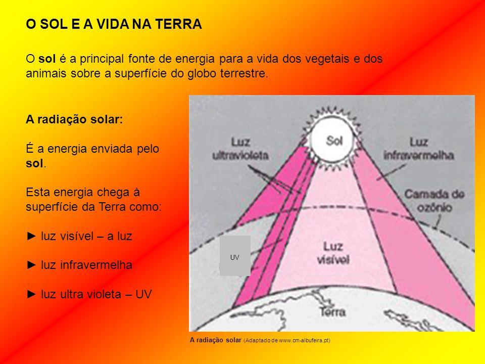 O SOL E A VIDA NA TERRA O sol é a principal fonte de energia para a vida dos vegetais e dos animais sobre a superfície do globo terrestre.