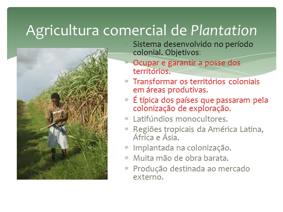 Agricultura comercial de Plantation