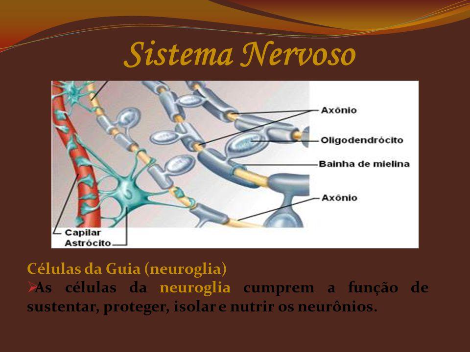 Sistema Nervoso Células da Guia (neuroglia)