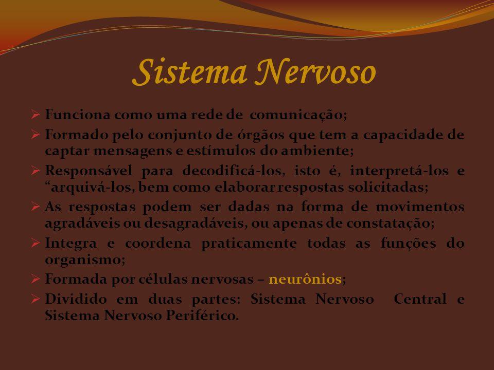 Sistema Nervoso Funciona como uma rede de comunicação;