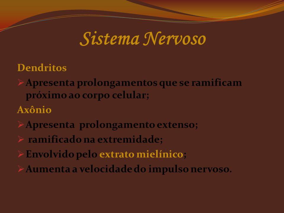 Sistema Nervoso Dendritos