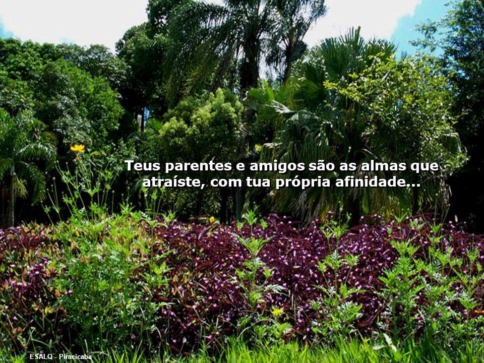 Teus parentes e amigos são as almas que atraíste, com tua própria afinidade...