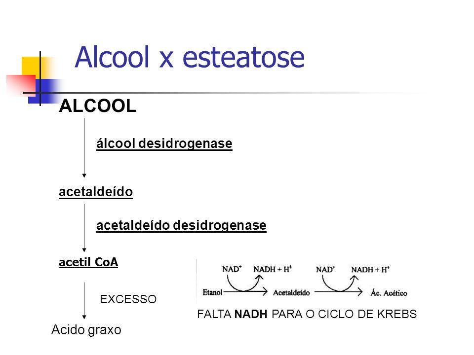 Alcool x esteatose ALCOOL álcool desidrogenase acetaldeído