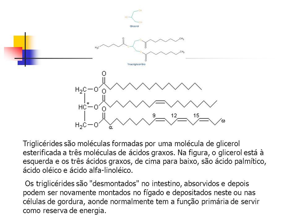 Triglicérides são moléculas formadas por uma molécula de glicerol esterificada a três moléculas de ácidos graxos. Na figura, o glicerol está à esquerda e os três ácidos graxos, de cima para baixo, são ácido palmítico, ácido oléico e ácido alfa-linoléico.