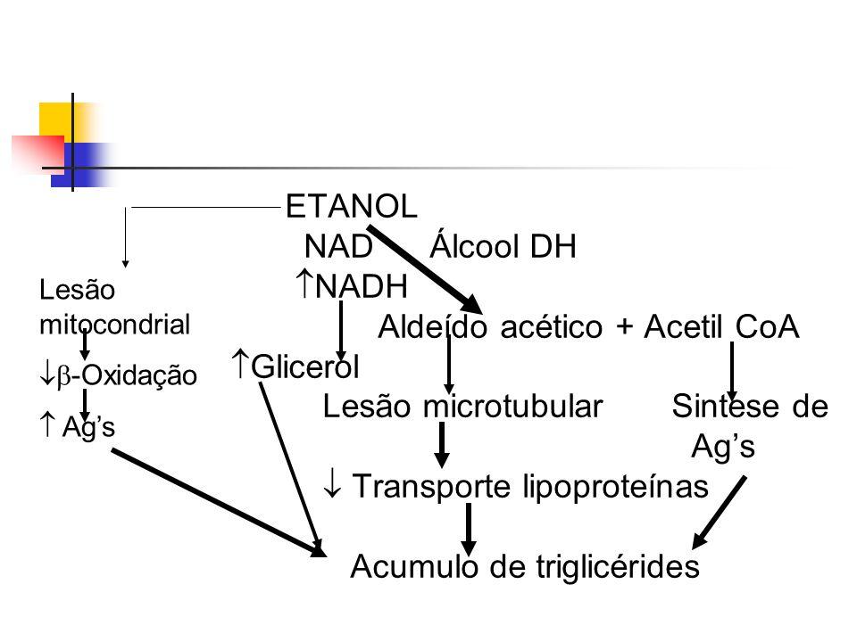 Aldeído acético + Acetil CoA Glicerol Lesão microtubular Sintese de