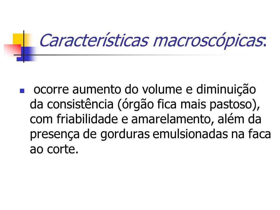 Características macroscópicas: