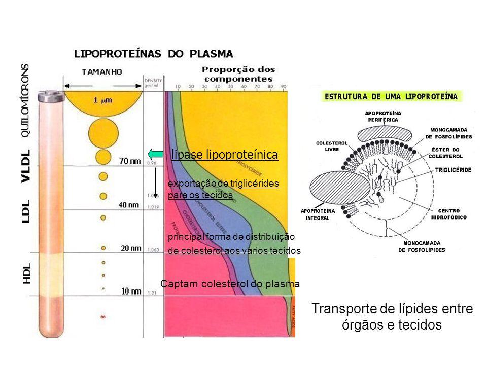 Transporte de lípides entre órgãos e tecidos
