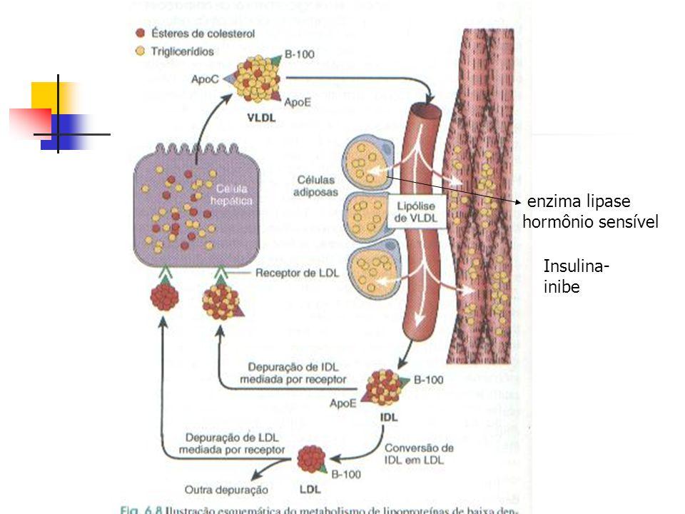 enzima lipase hormônio sensível