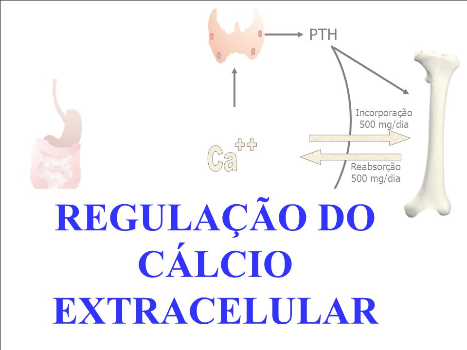 REGULAÇÃO DO CÁLCIO EXTRACELULAR