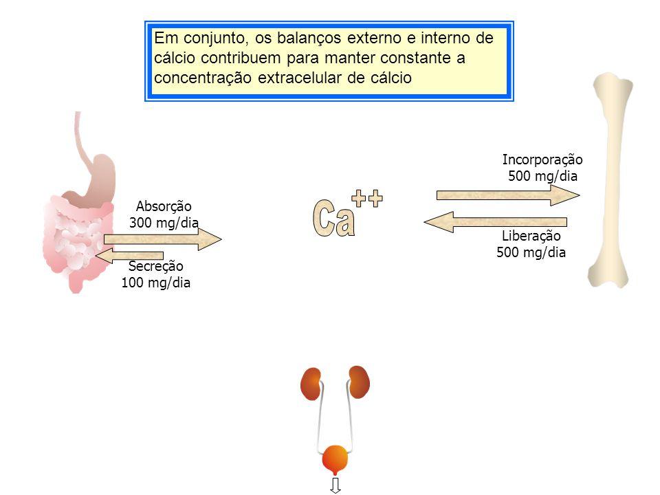 Em conjunto, os balanços externo e interno de cálcio contribuem para manter constante a concentração extracelular de cálcio