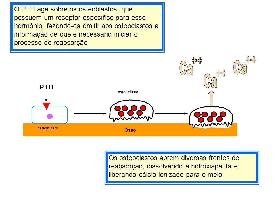 O PTH age sobre os osteoblastos, que possuem um receptor específico para esse hormônio, fazendo-os emitir aos osteoclastos a informação de que é necessário iniciar o processo de reabsorção