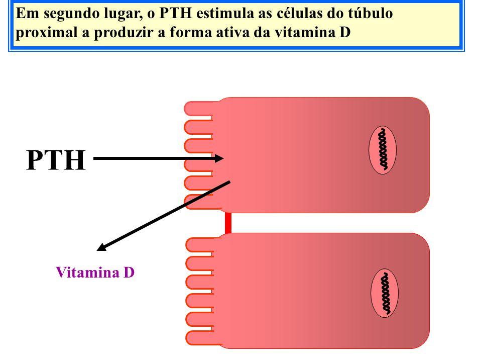 Em segundo lugar, o PTH estimula as células do túbulo proximal a produzir a forma ativa da vitamina D