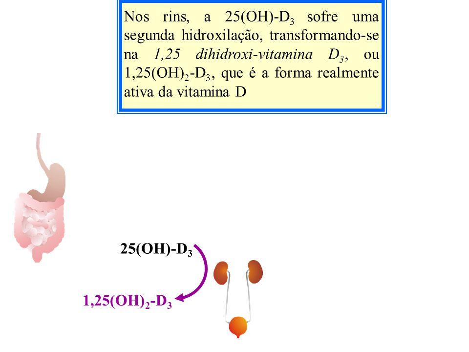 Nos rins, a 25(OH)-D3 sofre uma segunda hidroxilação, transformando-se na 1,25 dihidroxi-vitamina D3, ou 1,25(OH)2-D3, que é a forma realmente ativa da vitamina D