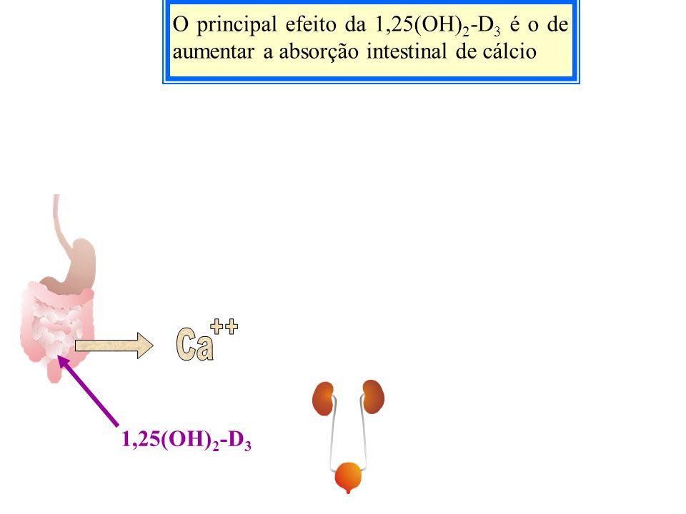 O principal efeito da 1,25(OH)2-D3 é o de aumentar a absorção intestinal de cálcio