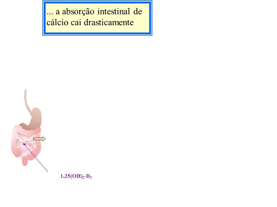 ... a absorção intestinal de cálcio cai drasticamente