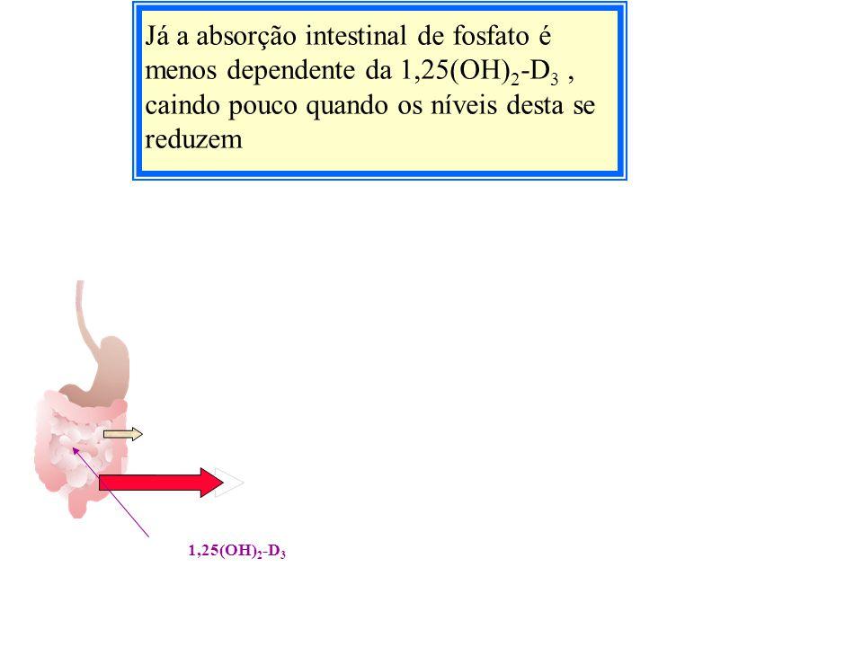 Já a absorção intestinal de fosfato é menos dependente da 1,25(OH)2-D3 , caindo pouco quando os níveis desta se reduzem