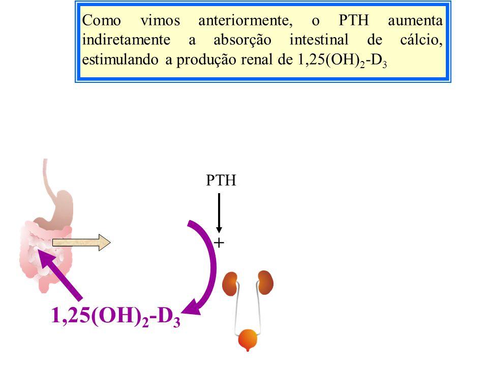 Como vimos anteriormente, o PTH aumenta indiretamente a absorção intestinal de cálcio, estimulando a produção renal de 1,25(OH)2-D3