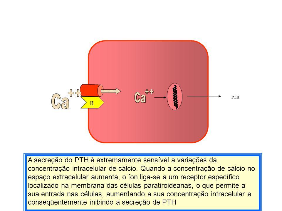 PTH Ca. ++ Ca. ++ Ca. ++ PTH. R.