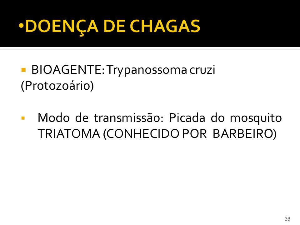 DOENÇA DE CHAGAS BIOAGENTE: Trypanossoma cruzi (Protozoário)