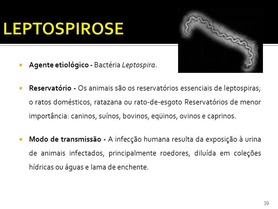 LEPTOSPIROSE Agente etiológico - Bactéria Leptospira.