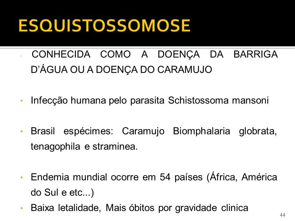 ESQUISTOSSOMOSE Infecção humana pelo parasita Schistossoma mansoni