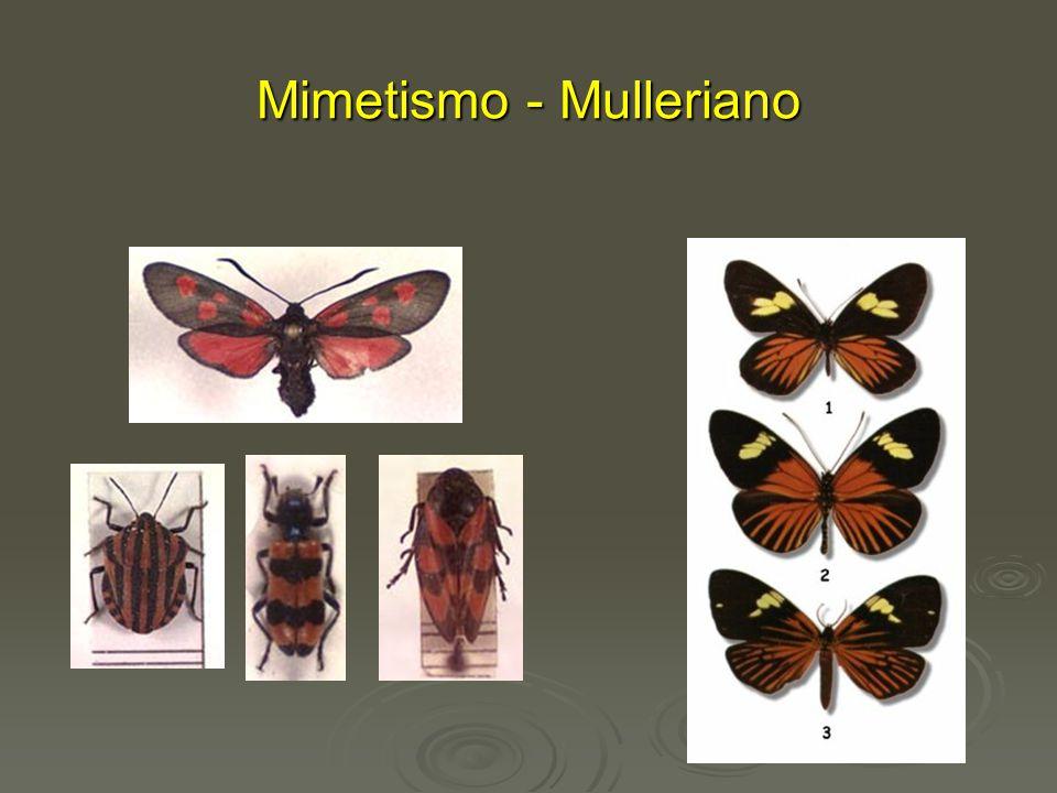 Mimetismo - Mulleriano