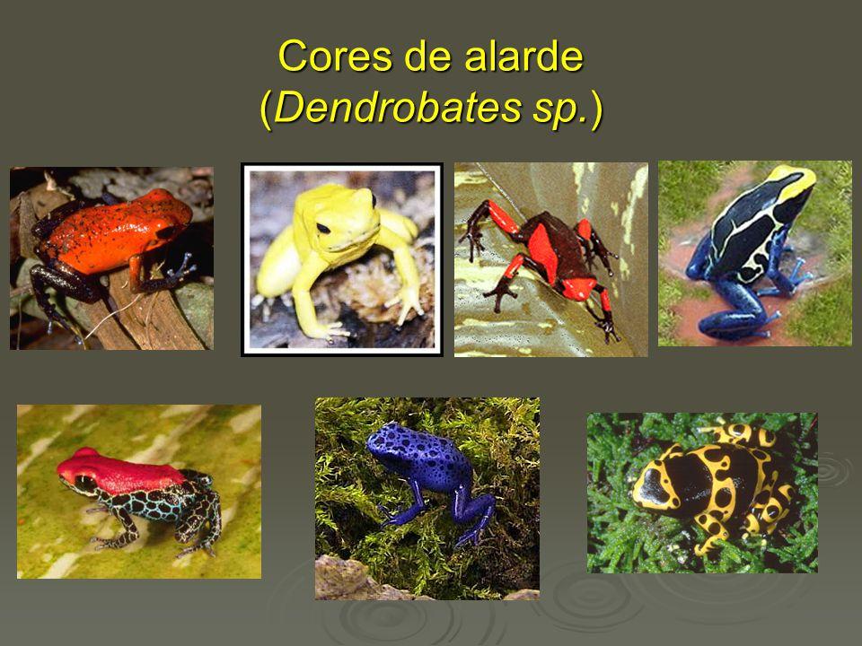 Cores de alarde (Dendrobates sp.)