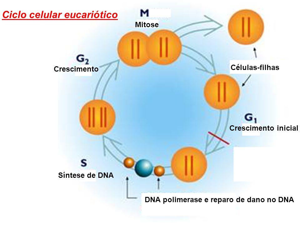 Ciclo celular eucariótico