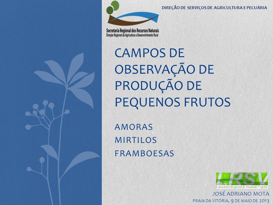 CAMPOS DE OBSERVAÇÃO DE PRODUÇÃO DE PEQUENOS FRUTOS