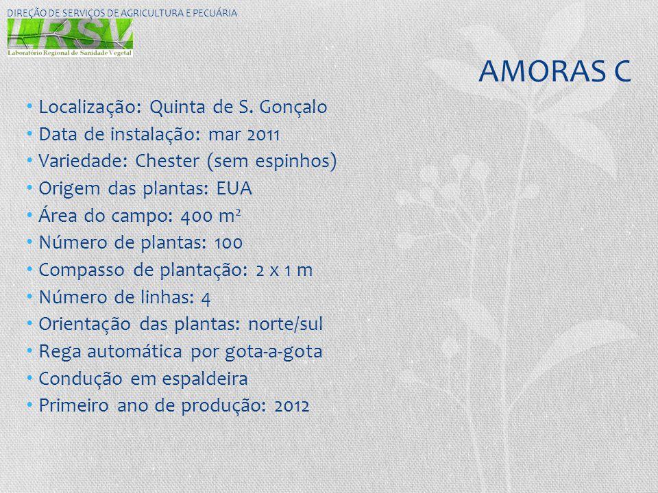 AMORAS C Localização: Quinta de S. Gonçalo