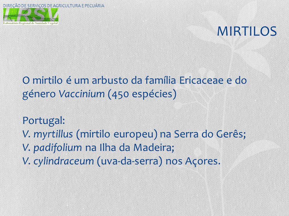 MIRTILOS O mirtilo é um arbusto da família Ericaceae e do